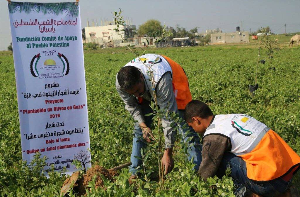 "Campaign ""Planting Olives in Palestine"""